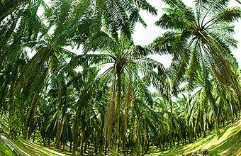 Налог на здоровье. В России могут ввести акцизы на пальмовое масло