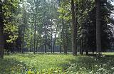 Лес рубят — экологи кричат, или «санитарные работы» в Беловежской пуще