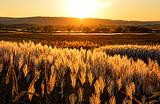 Земли много бывает. Кому бесплатный гектар на Дальнем Востоке?