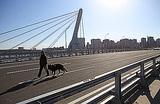 «Присудить имя Кадырова хоть чему-нибудь». В Петербурге прошел пикет против нового названия моста
