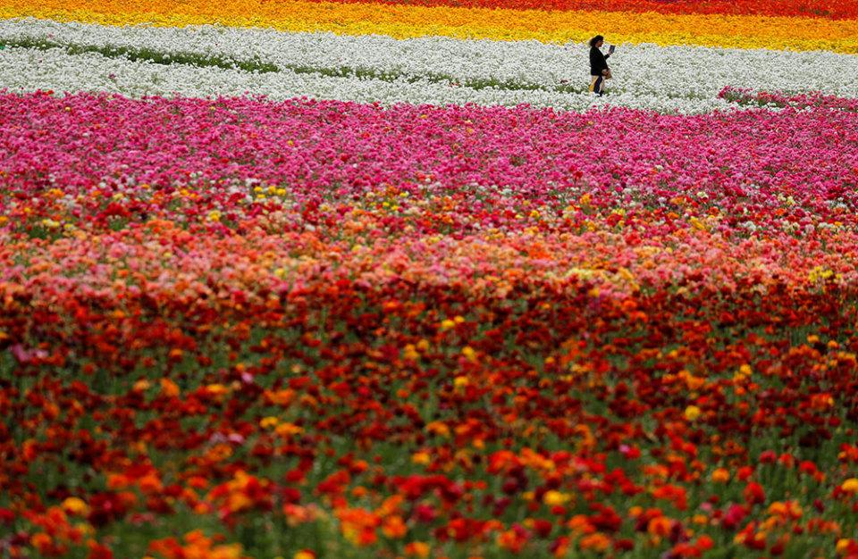 https://cdn.bfm.ru/gallery/width960/2019/03/22/flowers.jpg