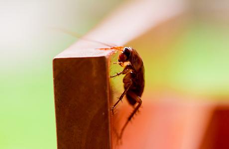 Бизнес на тараканах