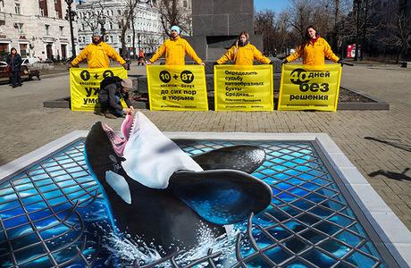 Кому решать судьбу «китовой тюрьмы» в Приморье?