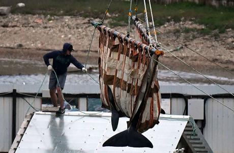 Почему косаток из «китовой тюрьмы» перевозят по суше, а не морем?