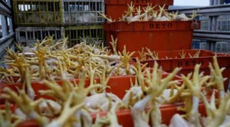 Куриные ноги. Фото: REUTERS