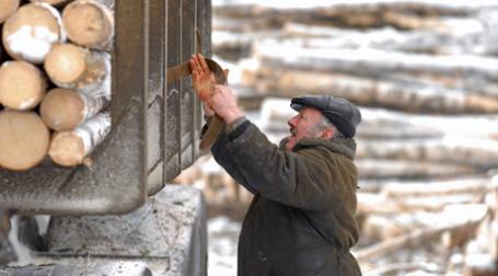 В России в 2009 году планируется сокращение объема лесозаготовок на 30%. Фото: ИТАР-ТАСС