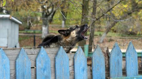 В условиях кризиса интерес россиян к защите своего имущества возрос. Фото: Александр Беленький/BFM.ru