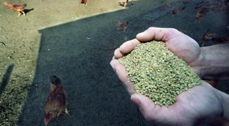 Зерна сои. Фото: AFP