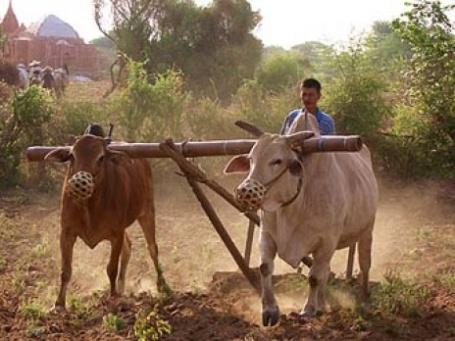 Сельскохозяственные работы в Индии. Фото: koflerdaniel/flickr.com