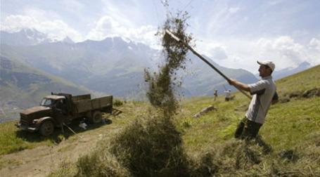 Уборка зерна в Северной Осетии. Фото: AFP