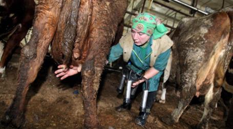 Чтобы заработать, просто надоить молока недостаточно, надо его самому переработать. Фото: AFP