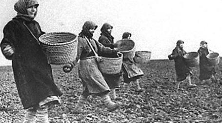 Безработные в Пензенской области выходят на поля кооператорами. Фото: rsva.ru
