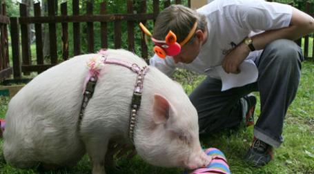 Теперь страховка должна покрывать случаи заражения свиным гриппом на отыхе. Фото: РИА Новости
