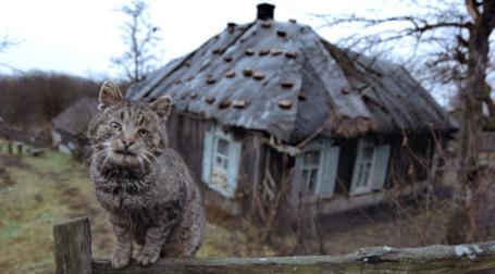 По цене московской квартиры можно купить целое село. Фото: РИА Новости