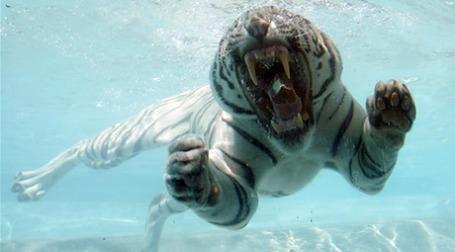2010 год, по восточному календарю — год Белого тигра.Фото: AFP
