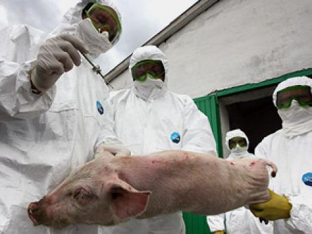 «Свиной» грипп держал в напряжении весь мир на протяжении почти года. Фото: РИА Новости