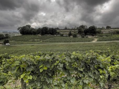 Виноделам и винным коллекционерам исландский вулкан также дал повод для тревог. Фото: alister667/flickr.com