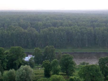 Вид на Химкинский лес. Фото: ecmo.ru