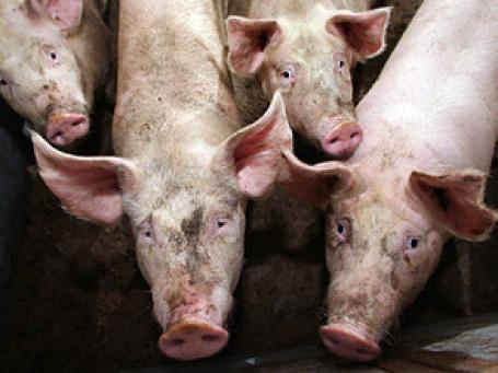 Развитие мясного животноводства Минсельхоз хочет выделить в отдельную стратегию до 2020 года. Фото: РИА Новости