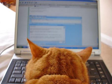 Надо принять за аксиому тот простой факт, что вредоносной программой сегодня может заразиться любой пользователь. Фото: edmittance/flickr.com