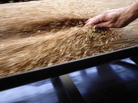 Россия может ввести временный запрет на экспорт зерна уже на будущей неделе. Фото: РИА Новости