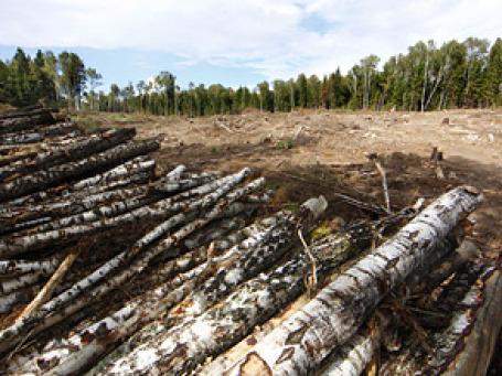 К настоящему времени вырублено около 40% территории Химкинского леса, отведенной под строительство трассы Москва–Санкт-Петербург. Фото: РИА Новости