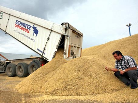 Эта российская пшеница вряд ли попадет на внешние рынки. Фото: РИА Новости
