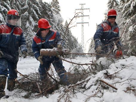 Обледеневшие деревья не выдерживают тяжести льда, снега и порывов ветра.  Они ломаются и падают, повреждая линии электропередач, что, в свою очередь, приводит к новым авариям. Фото: РИА Новости