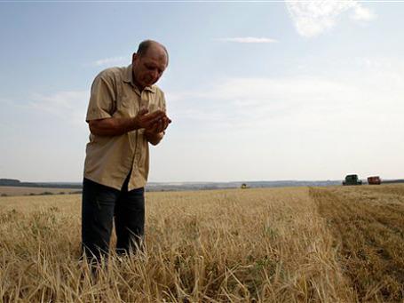 Мир ждет продовольственный кризис. Фото: АР