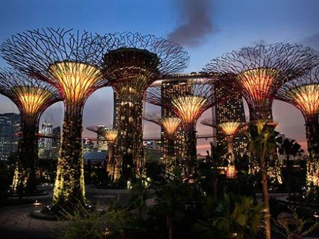 Искусственные деревья в Сингапуре по ночам освещают улицы накопленной за день солнечной энергией и собирают дождевую воду. Фото: AP