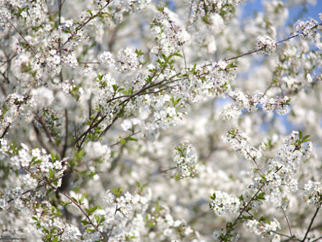 Фото: prosto photos/flickr.com