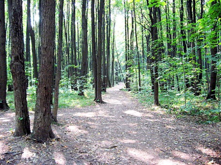 Характерная для Битцевского лесопарка тропинка. Фото: wikipedia.org