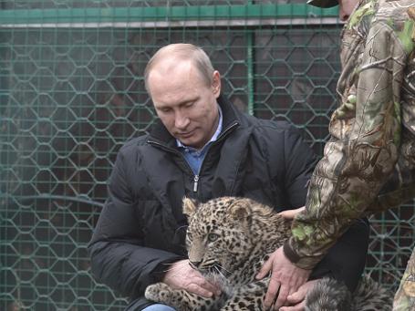 Президент РФ Владимир Путин в клетке с леопардом. Фото: РИА Новости