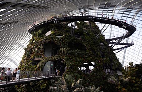 Ботанические сады Сингапура.