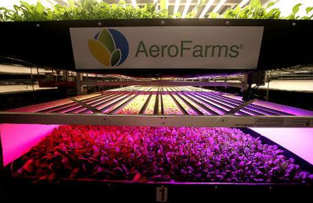 Ростки салата ромэн и рукколы на вертикальной ферме AeroFarms в Нью-Джерси.