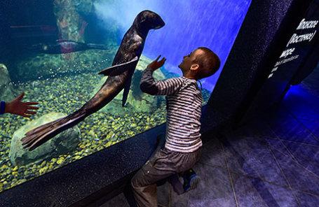 Ребенок в Приморском океанариуме Дальневосточного отделения Российской академии наук на острове Русский.