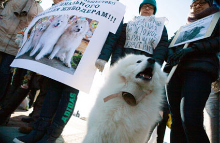 В Хабаровске прошел пикет против жестокого обращения с животными.