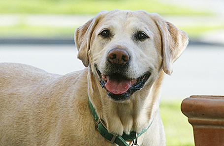 Ученые: собаки никогда иничего незабывают
