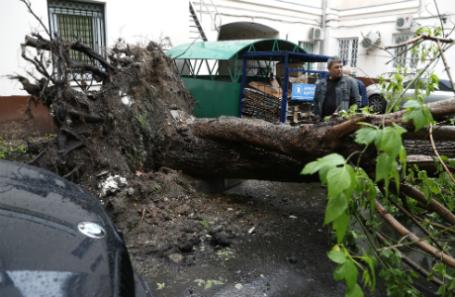 Россия. Москва. 29 мая 2017. Последствия урагана в одном из дворов города.