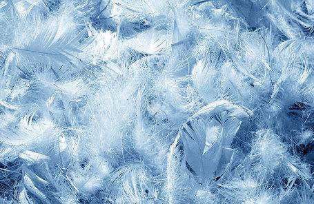 Ученые отыскали способ переработки птичьих перьев впищу