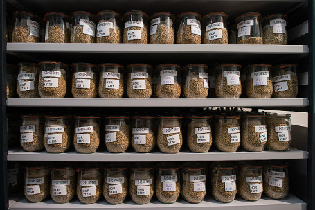 Около 150 тысяч образцов семян со всего мира.