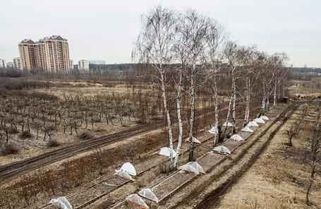 Опытные и селекционные поля Мичуринского сада Тимирязевской академии в Москве.