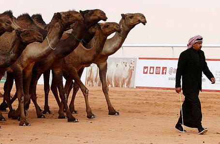 На фестивале верблюдов в Саудовской Аравии.