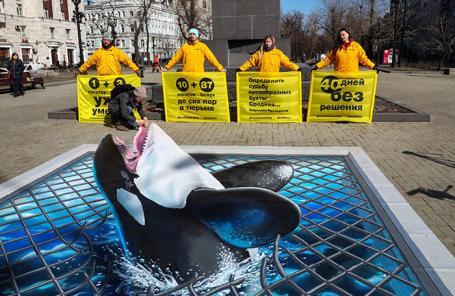 Акция Greenpeace за освобождение млекопетающих из «китовой тюрьмы» в Средней бухте в Приморском крае.