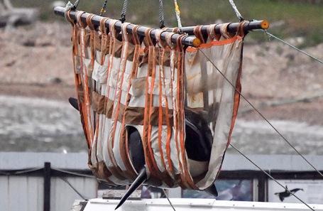 Подготовка к выпуску на волю млекопитающих из «китовой тюрьмы» в Приморье.