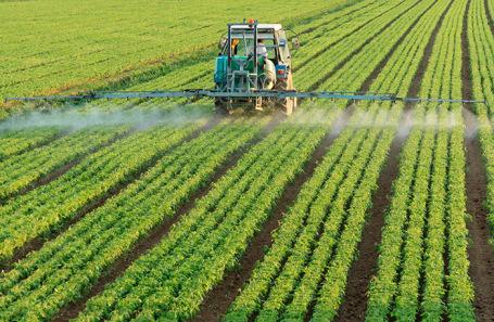https://cdn.bfm.ru/news/maindocumentphoto/2019/07/16/pesticidy.jpg