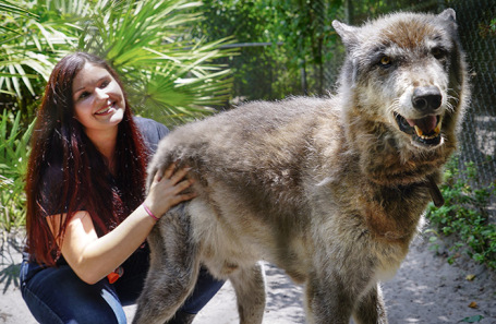 Гибрид собаки и волка.