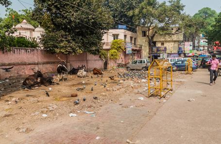 На одной из улиц Дели, Индия.