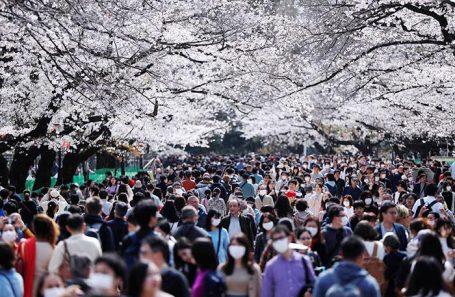 Цветение сакуры в Токио.