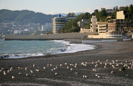 Чайки на пляже «Ривьера» в Сочи.